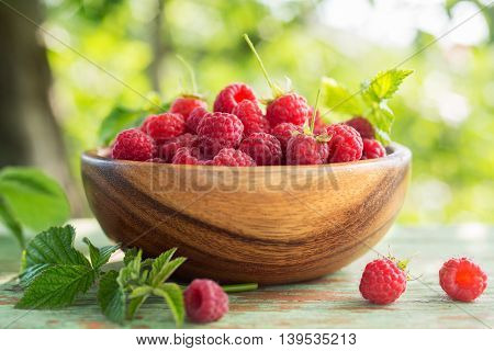 Freshly Picked Raspberries in a bowl in the garden. Closeup