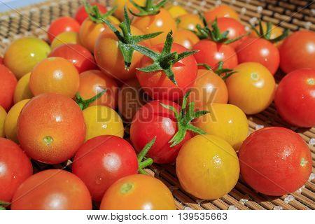 Big Harvest In Home Garden