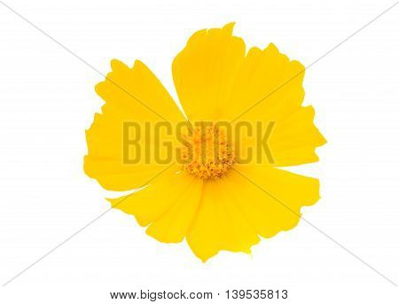 colorful yellow flower on a white background