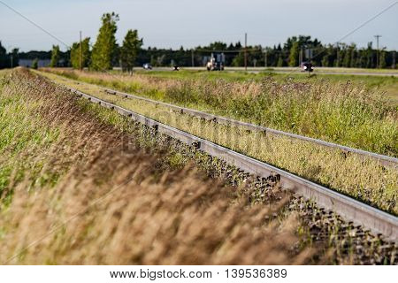 Spilled grain is growing between the rails of Canadian prairie train tracks