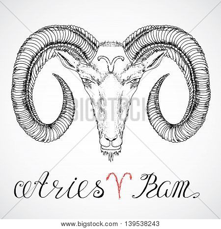 Hand drawn astrological zodiac sign Ram or Aries. Line art vector illustration of engraved horoscope symbol. Head with horns, traditional style. Doodle drawing and sketch with calligraphic lettering