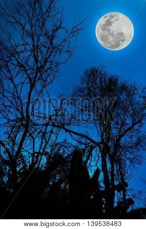 Silhouettes Of Dry Tree Against Sky And Beautiful Full Moon. Outdoor.