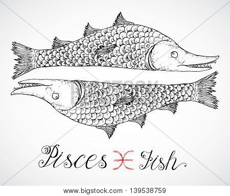 Hand drawn astrological zodiac sign Fish or Pisces. Line art vector illustration of engraved horoscope symbol. Traditional style. Doodle drawing and sketch with calligraphic lettering