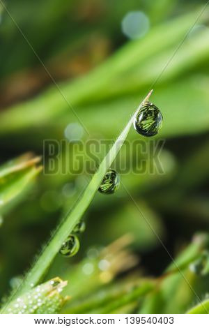 Dew drops on green grass leaves close up