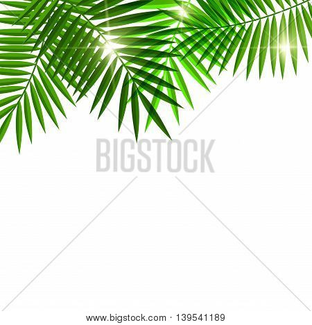 green Leaves of palm tree for you design