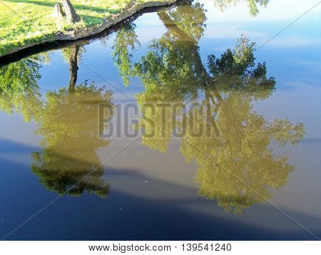 Mirrored trees on a riverside (by the morning)