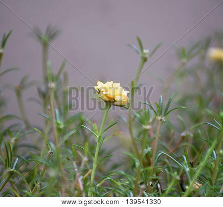 Macro image of yellow flower on grass.