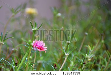 Macro image of pink flower on grass.