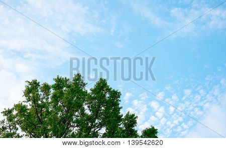 Looking Up At Sky And Green Tree,nature Background