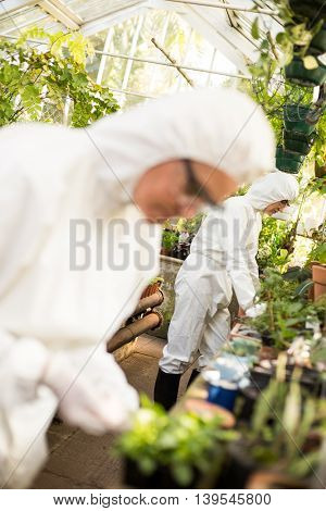 Female scientists examining plants at greenhouse