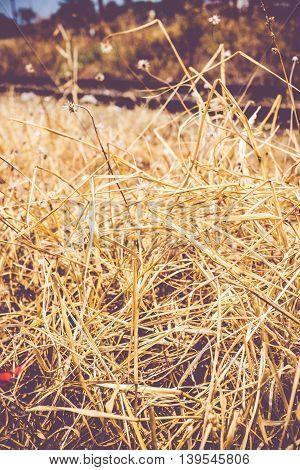 vintage filter:  Dried yellow grass at railway