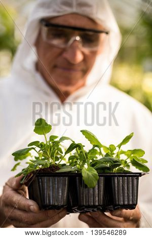 Male scientist in clean suit examining plants at greenhouse