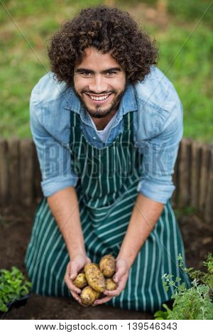Portrait of happy male gardener harvesting potatoes at greenhouse