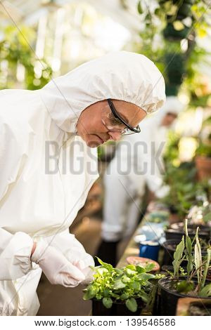 Side view of female scientist in clean suit examining potted plant at greenhouse