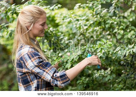 Side view of female gardener pruning plants at greenhouse