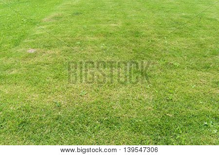 The cropped lawn with green cropped grass