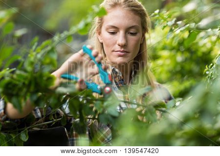 Young female gardener pruning plants at greenhouse