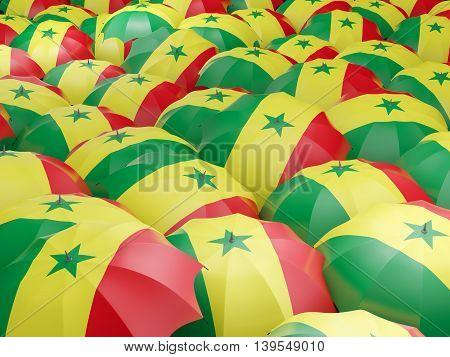 Umbrellas With Flag Of Senegal