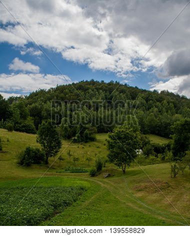 Beautful green field and trees on hill in back