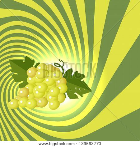 Striped spiral grape patisserie background. Grape fruit color. Grape berries striped spiral tunnel. Fruit spiral for cover design of food or beverage with wine taste. Vector Illustration.