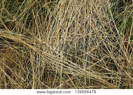 Grass texture - background. Dry hay laying on the top of the green grass.