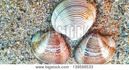 three, mussels on sea sand ,colored ,
