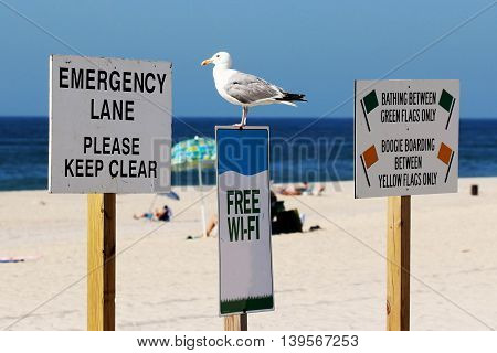 A seagull standing on a sign at the beach