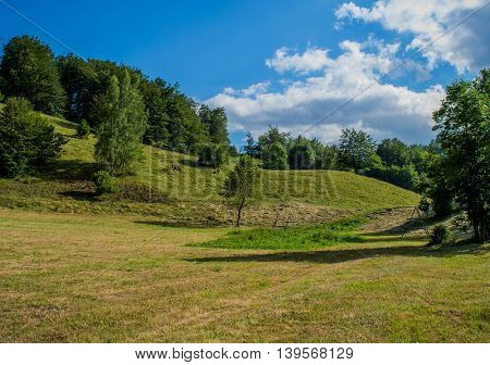 Beautiful green field with trees in the back