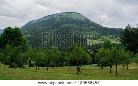 Trees on field with mountains in the back