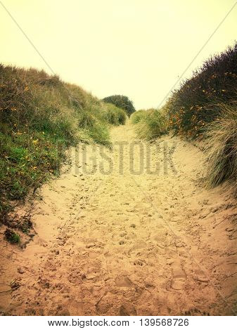 Lonely footpath through a beach dune landscape