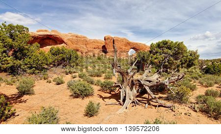 Arches National Park. Rock towers and sandstone formations