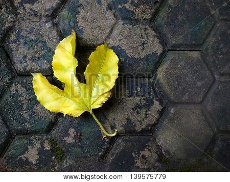 Yellow leaf as an autumn symbol on paving road