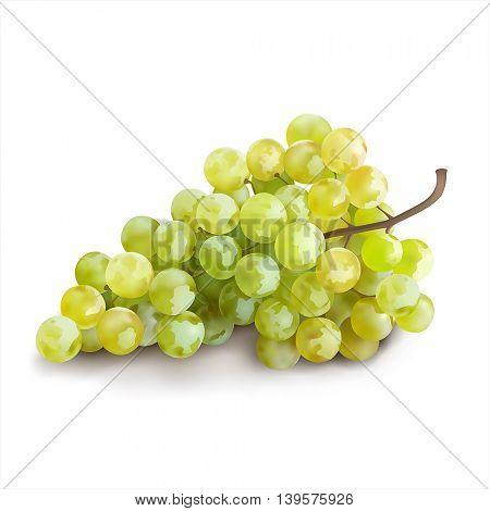 Ripe grape on white background. Vector illustration.