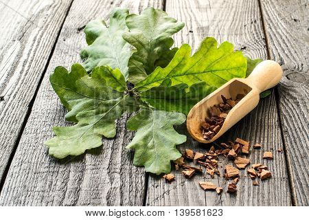 Medicinal plant an oak (Quercus). Branch and oak bark in a scoop on a dark wooden table. In herbal medicine used the bark leaves and acorns. Acorns are used as a substitute for coffee. Selective focus