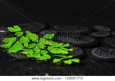 Beautiful Spa Background Of Green Twig Adiantum Fern On Zen Basalt Stones With Drops, Closeup