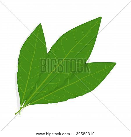 Bay leaf vector illustration isolated on a white background