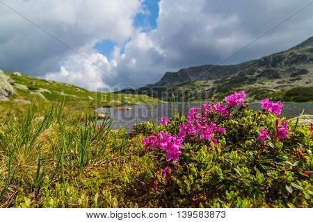 Beautiful mountain scenery in the Transylvanian Alps in summer