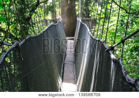 Canopy Walk View