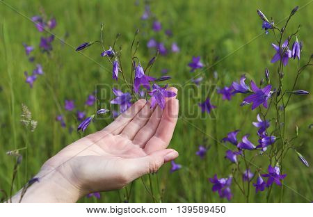 Female hand touching flower bell. Macro. Background