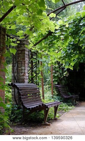 Bench in a beautiful park under vine in the summer