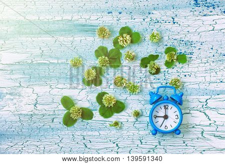 blue retro alarm clock and clover flowers on rustic wooden table summer time