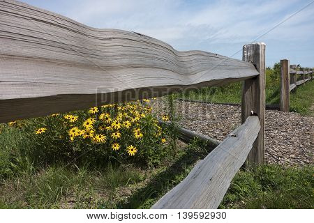 Wooden fence in field of Black Eyed Susan