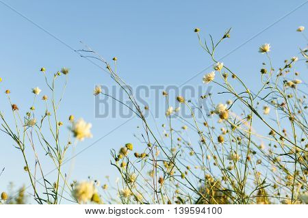 Wildflowers at the meadow front of blue sky