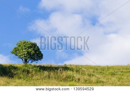Isolated Tree Over Blue Sky. Summer Panorama
