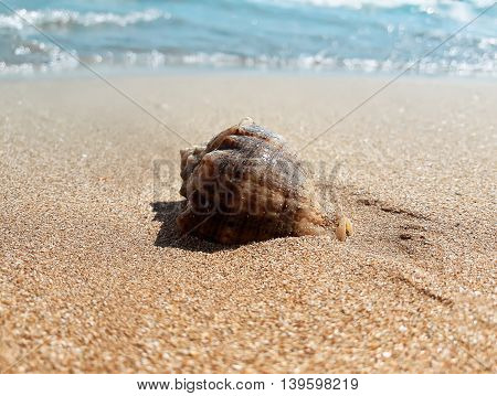 Large whelk shell in the sand near the sea. Summer vacation background