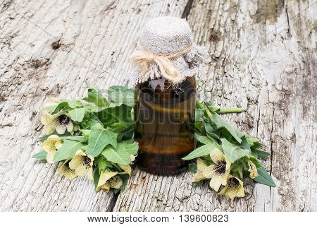 Black henbane (Hyoscyamus niger) and oil in a brown pharmaceutical vial. Henbane poisonous plant. In herbal medicine is used as a medicinal plant