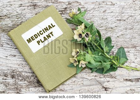 Black henbane (Hyoscyamus niger) and herbalist handbook. Henbane poisonous plant. In herbal medicine is used as a medicinal plant