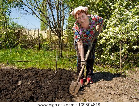 Smiling elderly woman is digging earth in the garden