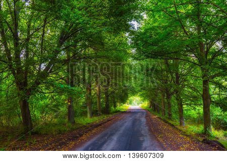 Beautiful Alley Of Green Trees And Sandy Road