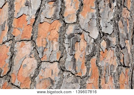 detailed and colorful Pine tree bark background
